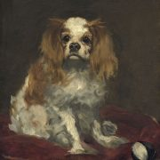 chien king-charles